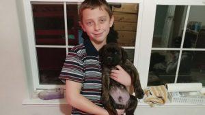Boy Holding A Cane Corso Puppy